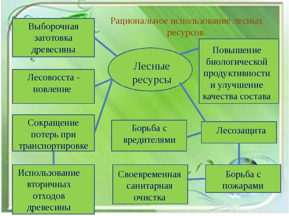 Рациональное использование лесных ресурсов. Лесные ресурсы Выборочная заготов...