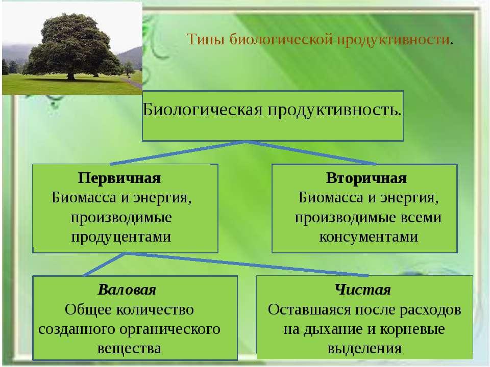 Типы биологической продуктивности. Биологическая продуктивность. Первичная Би...
