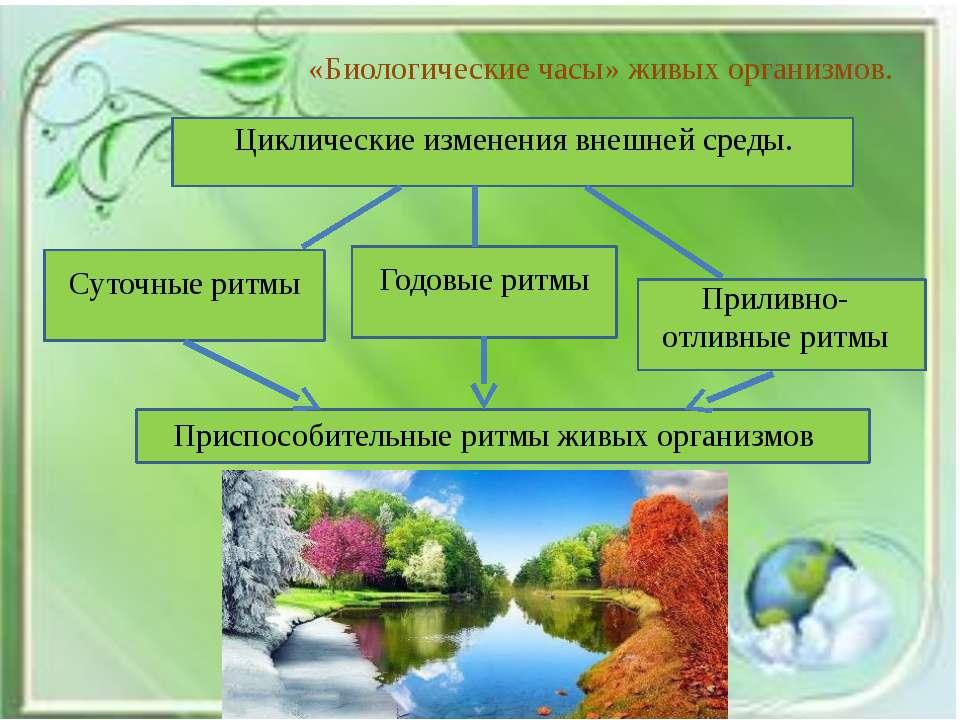 «Биологические часы» живых организмов. Циклические изменения внешней среды. С...