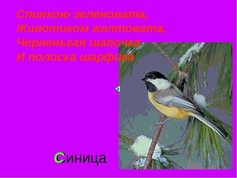 Синица С Спинкою зеленовата, Животиком желтовата, Черненькая шапочка И полоск...