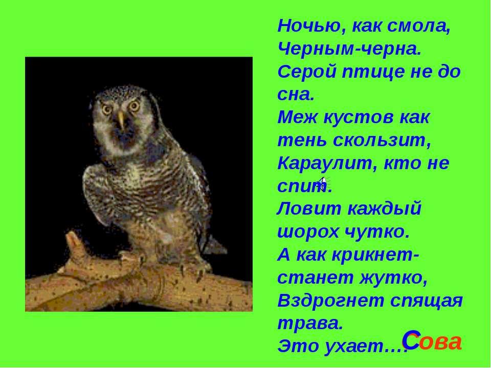 Ночью, как смола, Черным-черна. Серой птице не до сна. Меж кустов как тень ск...