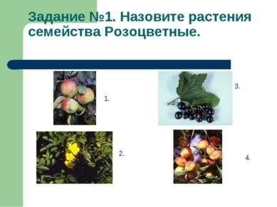 Задание №1. Назовите растения семейства Розоцветные. 1. 2. 3. 4.