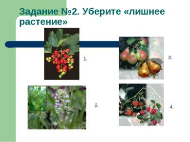 Задание №2. Уберите «лишнее растение» 1. 2. 3. 4.