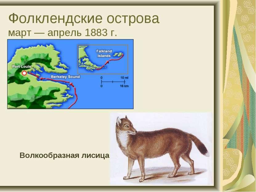 Фолклендские острова март — апрель 1883 г. Волкообразная лисица