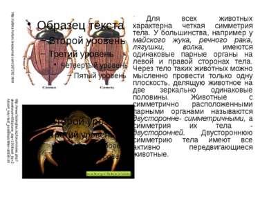 Для всех животных характерна четкая симметрия тела. У большинства, например у...