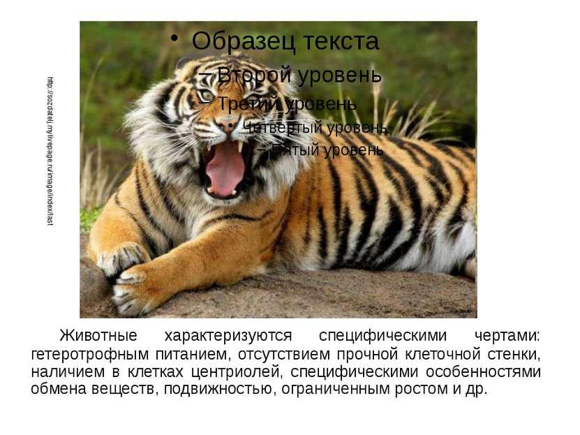 Животные характеризуются специфическими чертами: гетеротрофным питанием, отсу...