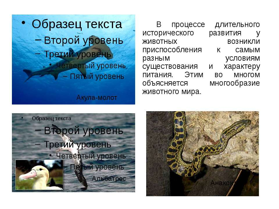 В процессе длительного исторического развития у животных возникли приспособле...