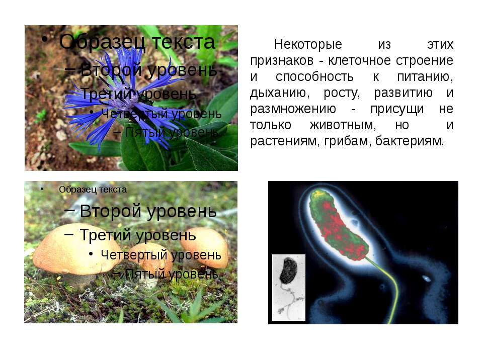 Некоторые из этих признаков - клеточное строение и способность к питанию, дых...