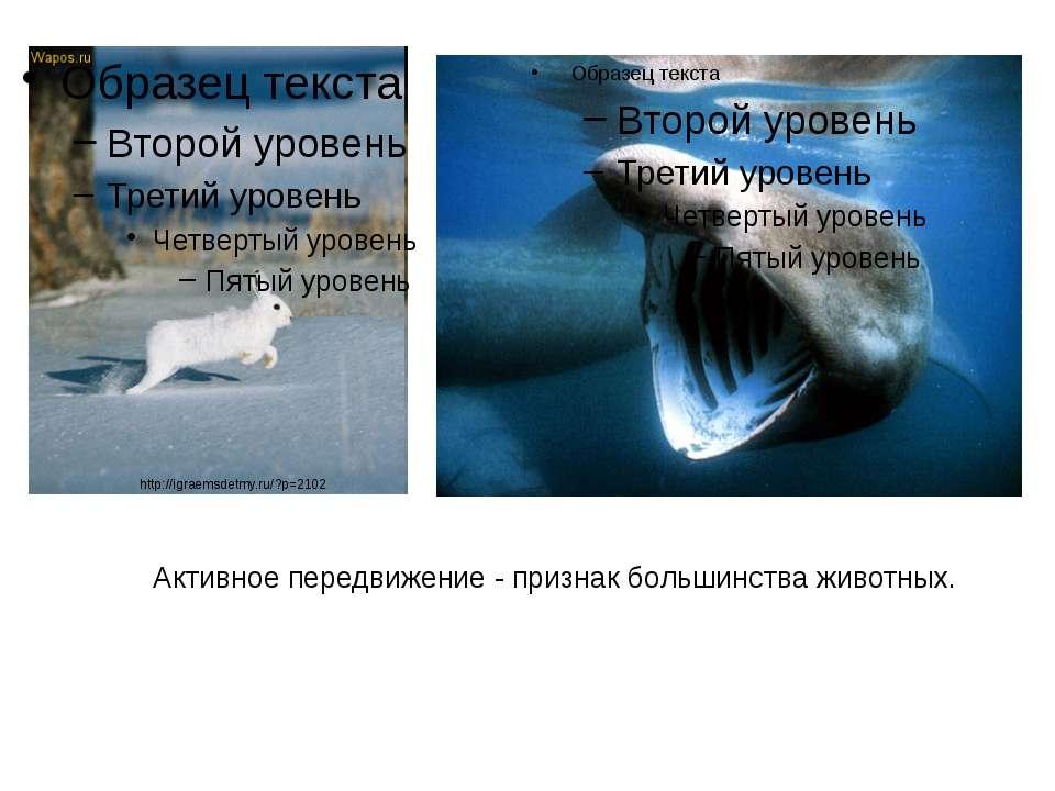Активное передвижение - признак большинства животных. http://igraemsdetmy.ru/...
