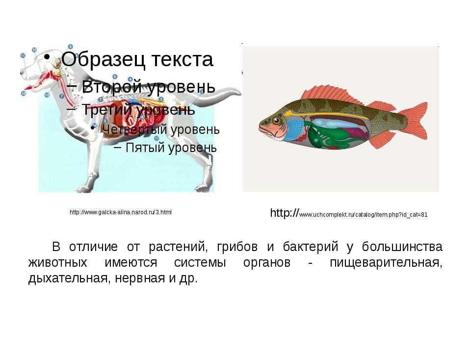 В отличие от растений, грибов и бактерий у большинства животных имеются систе...
