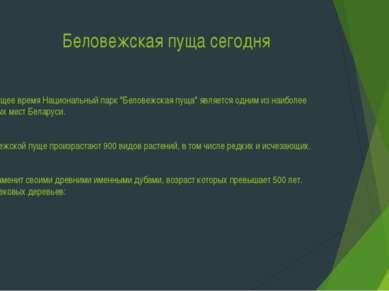 """Беловежская пуща сегодня В настоящее время Национальный парк """"Беловежская пущ..."""