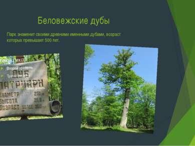 Беловежские дубы Парк знаменит своими древними именными дубами, возраст котор...