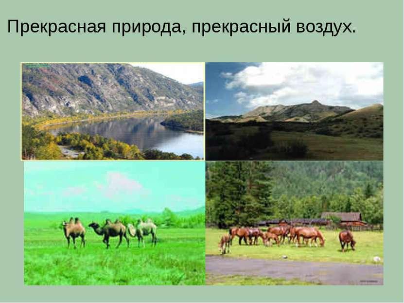 Прекрасная природа, прекрасный воздух.