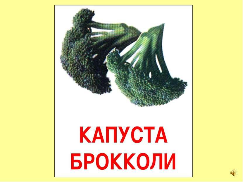 КАПУСТА БРОККОЛИ