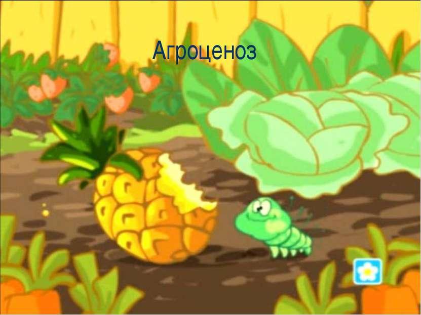 Агроценоз