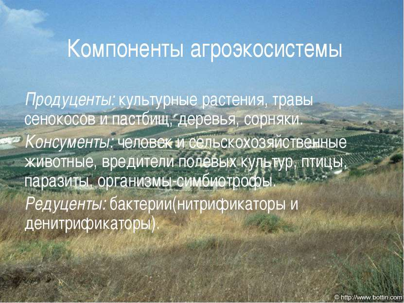 Компоненты агроэкосистемы Продуценты: культурные растения, травы сенокосов и ...