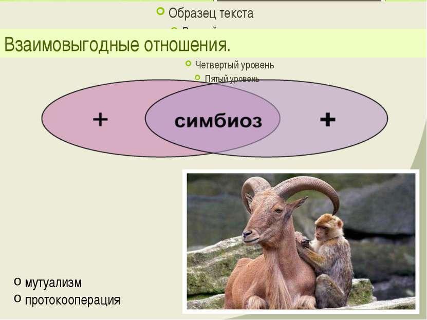 Взаимовыгодные отношения. мутуализм протокооперация