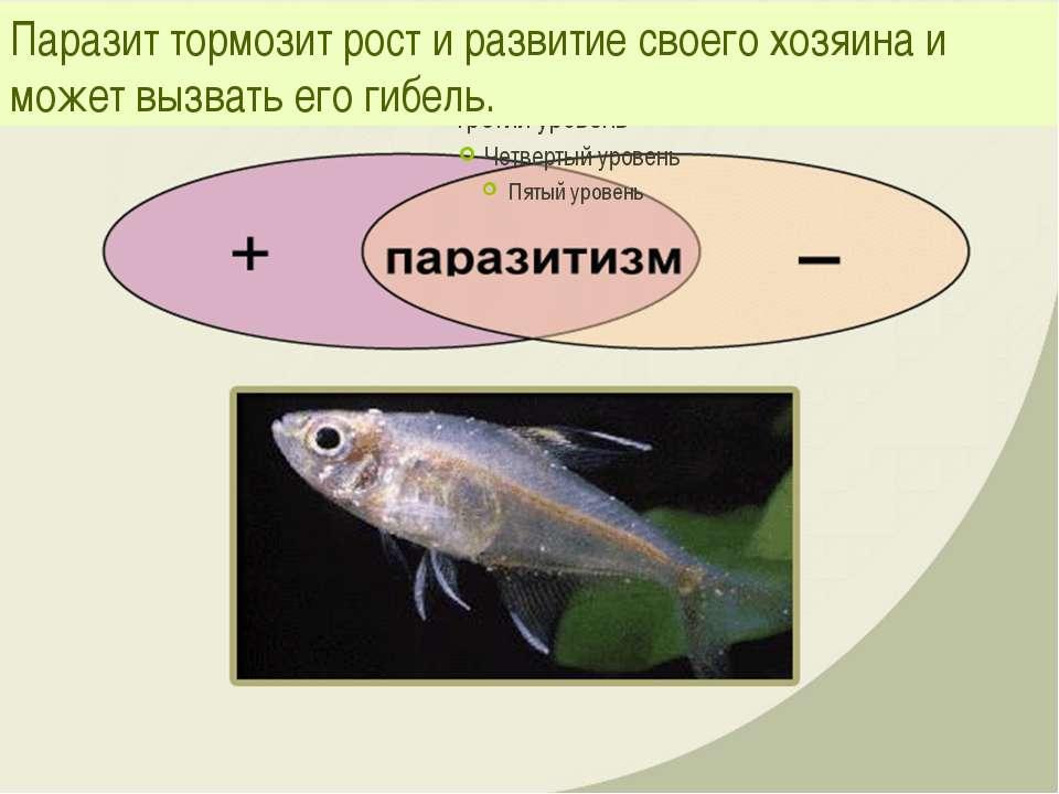 Паразит тормозит рост и развитие своего хозяина и может вызвать его гибель.