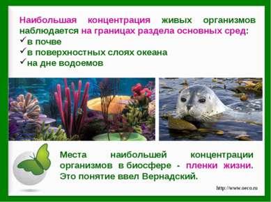 Наибольшая концентрация живых организмов наблюдается на границах раздела осно...