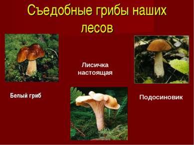 Съедобные грибы наших лесов Белый гриб Лисичка настоящая Подосиновик