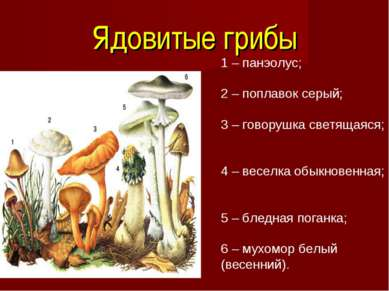 Ядовитые грибы 1 – панэолус; 2 – поплавок серый; 3 – говорушка светящаяся; 4 ...