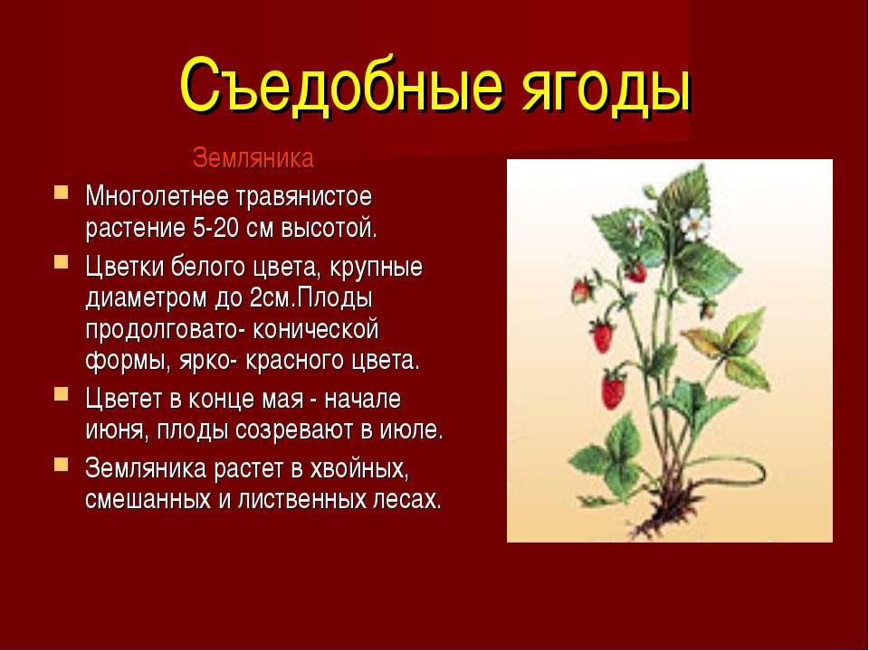 Съедобные ягоды Земляника Многолетнее травянистое растение 5-20 см высотой. Ц...