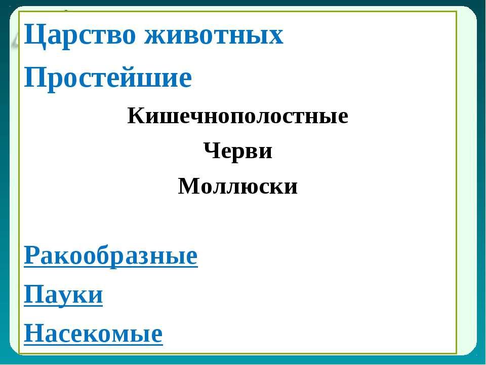 Царство животных Царство животных Простейшие Кишечнополостные Черви Моллюски ...