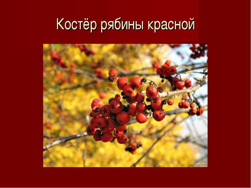 Костёр рябины красной