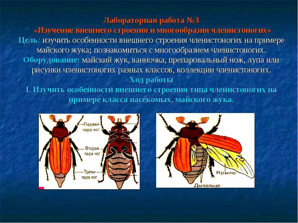 Лабораторная работа №3 «Изучение внешнего строения и многообразия членистоног...