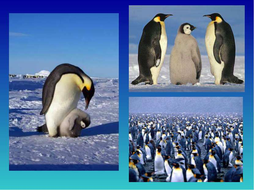 Вантарктиде снег илед, гололед ииней. Несмотря нато, живёт там народ пинг...