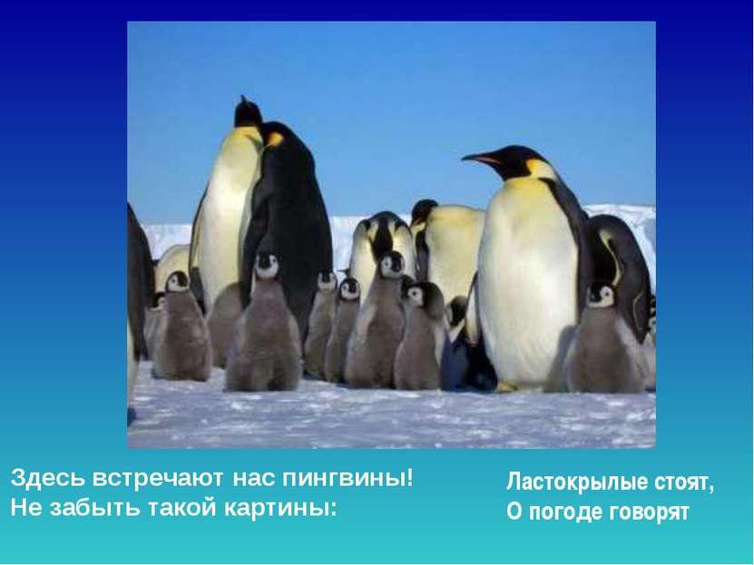 Здесь встречают нас пингвины! Не забыть такой картины: Ластокрылые стоят, О...