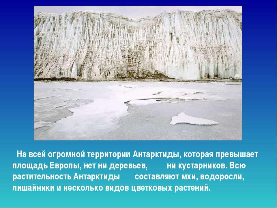 На всей огромной территории Антарктиды, которая превышает площадь Европы, нет...