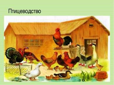 Птицеводство