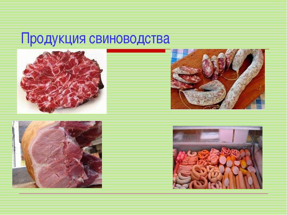 Продукция свиноводства