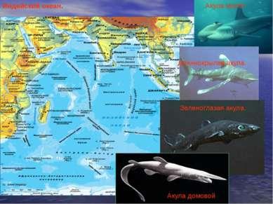 Индийский океан. Акула молот Длиннокрылая акула. Зеленоглазая акула. Акула до...