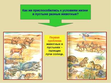 Как же приспособились к условиям жизни в пустыне разные животные? Первая проб...