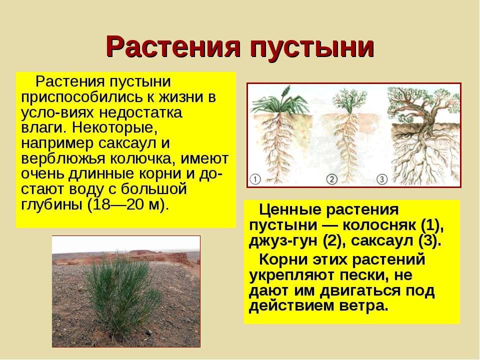 Растения пустыни Растения пустыни приспособились к жизни в усло виях недостат...