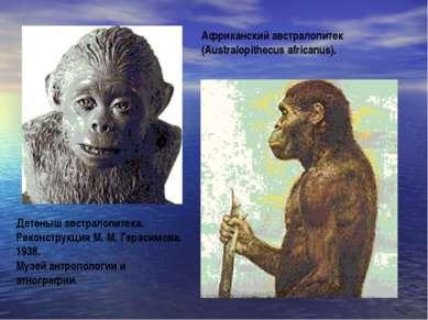 Африканский австралопитек (Australopithecus africanus). Детеныш австралопитек...