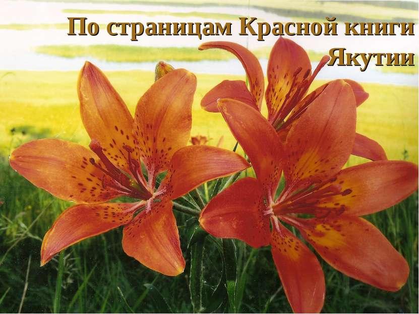 По страницам Красной книги Якутии