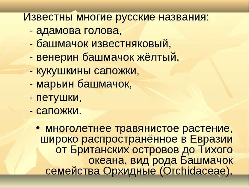 Известны многие русские названия: - адамова голова, - башмачок известняковый,...