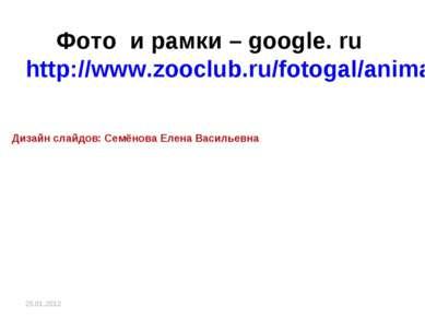 Фото и рамки – google. ru http://www.zooclub.ru/fotogal/anima/birds13.shtml Д...