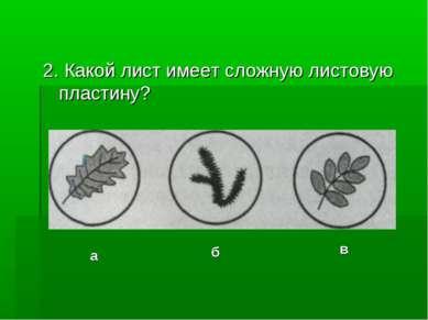 2. Какой лист имеет сложную листовую пластину? а б в