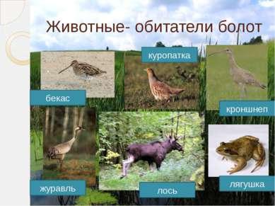 Животные- обитатели болот куропатка бекас кроншнеп журавль лось лягушка