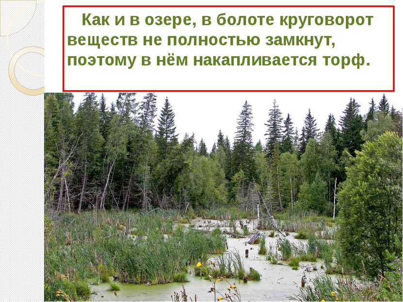 Как и в озере, в болоте круговорот веществ не полностью замкнут, поэтому в нё...
