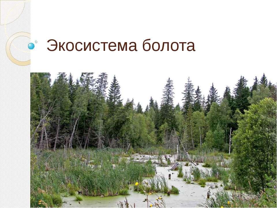 Экосистема болота