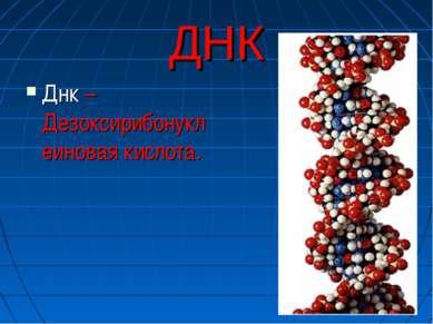 ДНК Днк – Дезоксирибонуклеиновая кислота.