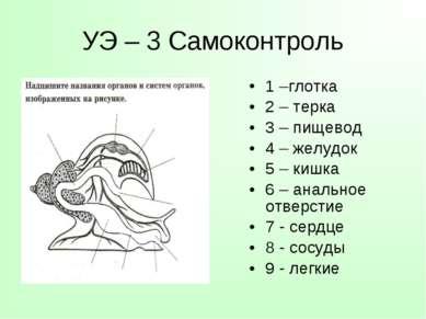 УЭ – 3 Самоконтроль 1 –глотка 2 – терка 3 – пищевод 4 – желудок 5 – кишка 6 –...
