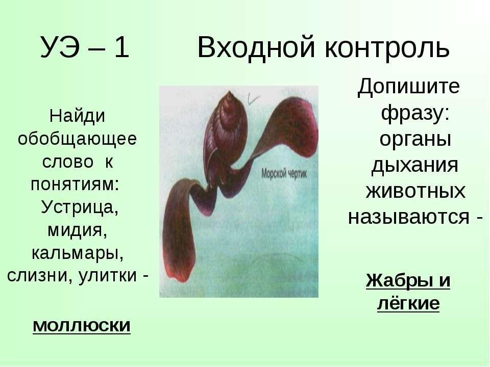 УЭ – 1 Входной контроль Допишите фразу: органы дыхания животных называются - ...