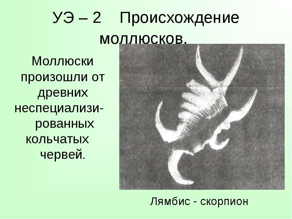 УЭ – 2 Происхождение моллюсков. Моллюски произошли от древних неспециализи- р...