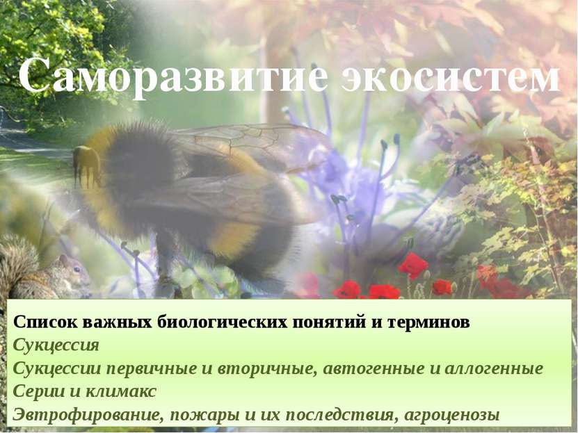 Саморазвитие экосистем Список важных биологических понятий и терминов Сукцесс...